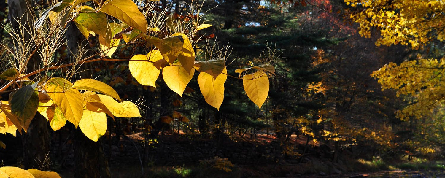 Fall Foliage Trail Package - Hotel Anthracite